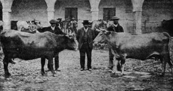 imagen antigua ganadería