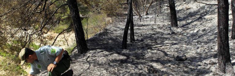 Un agente forestal toma muestras para investigar las causas de un incendio. (EFE)